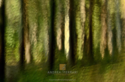 Painted forest 1