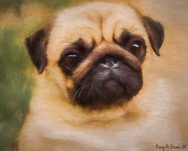 Reddi, the pug ...a painting from photo