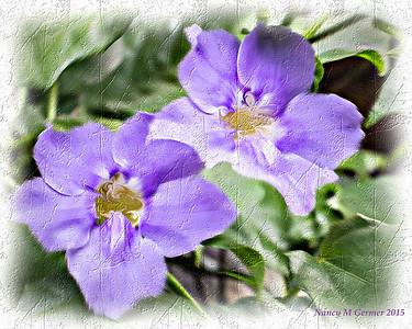 Purple flowers textured