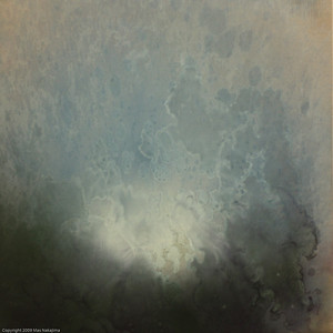 """Forest: Wildflower, 2003 #2; 16""""x16"""", oil on wood (Birch)"""