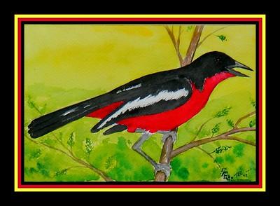 1-Crimson-breasted Shrike, 6x9, watercolor, june 8, 2017.