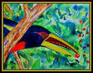 1-Ivory-billed Aracari, 5.5x7, watercolor, oct 24, 2019.