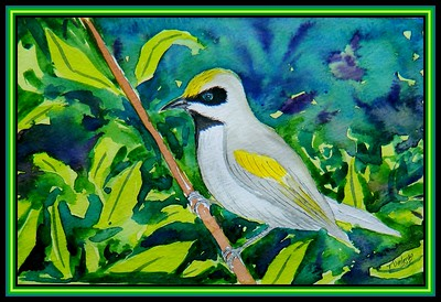 1-Golden-winged Warbler, 8x5.5, watercolor & ink, feb 21, 2018.