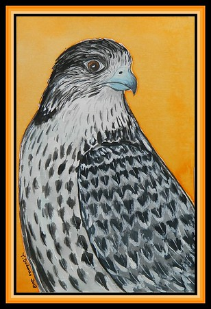 1-Gyrfalcon,(Falco rusticolus). 230x155mm, watercolor, acrylic and ink, aug 10, 2018.