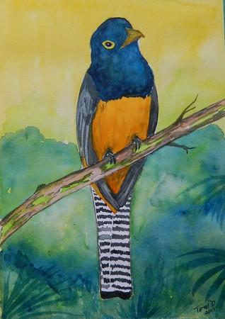 1-Gartered Trogon - Panama, 6x8.5, watercolor, dec 5, 2015.
