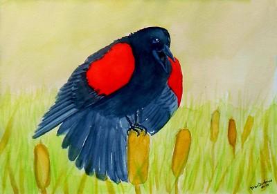 1-Redwinged Blackbird, 6x8.5, watercolor, nov 23, 2015.
