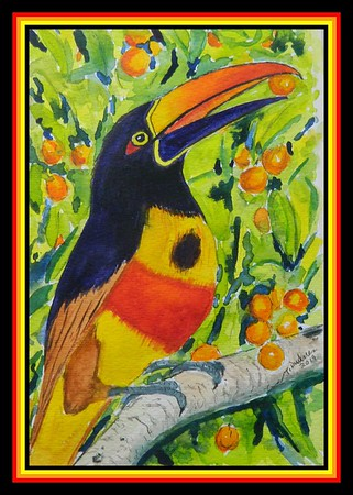 1-Fiery-billed Aracari, Pteroglossus frantzii. Pacific slope Costa Rica & Panama. 6x9, watercolor, jan 21, 2019.