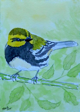 1-Black-throated Green Warbler. 4x6, watercolor, nov 17, 2015.