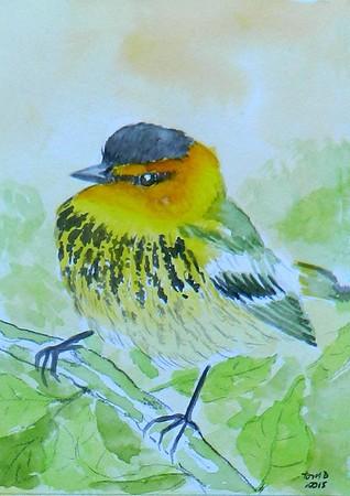 1-Cape May Warbler. 4x6, watercolor, nov 17, 2015.