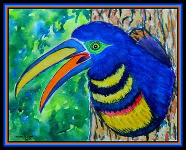 1-Many-banded Aracari, 5.5x7, watercolor, oct 24, 2019.D