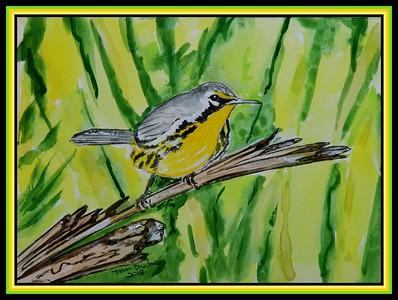 1-Bahama Warbler. Setophaga flavescens. 150x200mm, watercolor, acrylic & ink, oct 1, 2018.