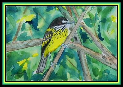 1-Painted Tody-Flycatcher, Todirostrum pictum - Guyana. 150x230mm, watercolor, acrylic, ink, sep 23, 2018.