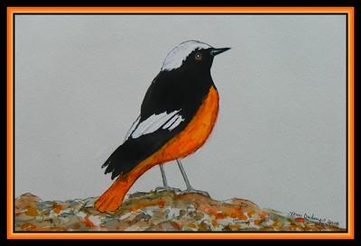 Guldenstadt's_Redstart,Phoenicurus erythrogastrus, Azerbaijan. 145x215mm, watercolor, acrylic & ink, july 22, 2018
