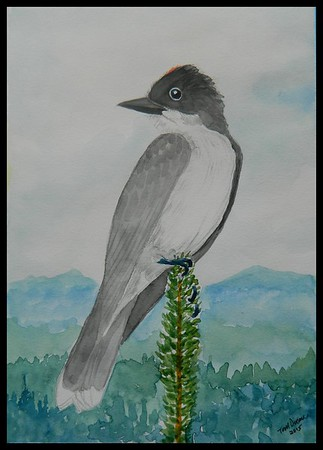 1-Eastern Kingbird, 6x8.5, watercolor, nov 19, 2015.