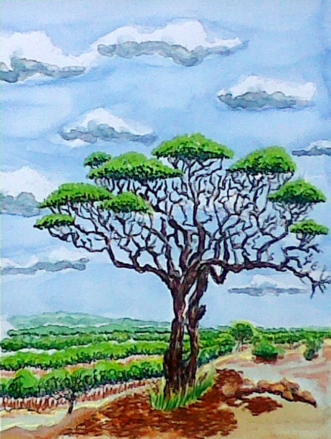 """Somewhere in Botswana... (1998) Watercolor, Pen & Ink Painted on location 12"""" x 9"""" Price on Request Price"""