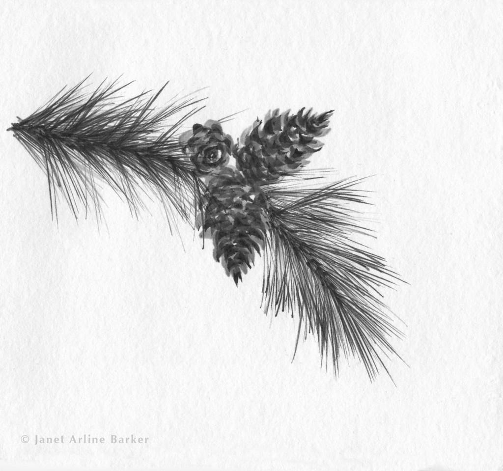 pinecones-print