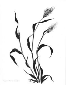 whole wheat-print