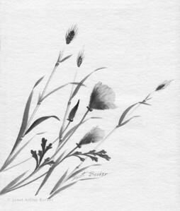 poppies-print