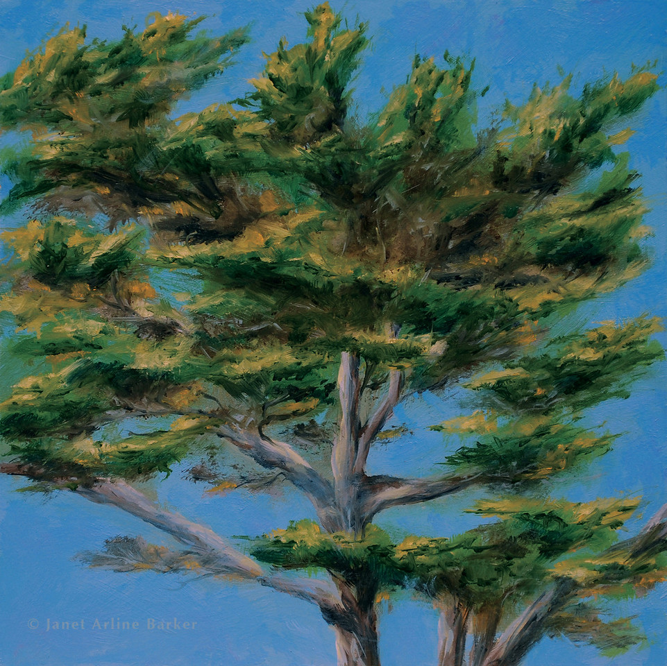 04-look out tree-DSC_0067