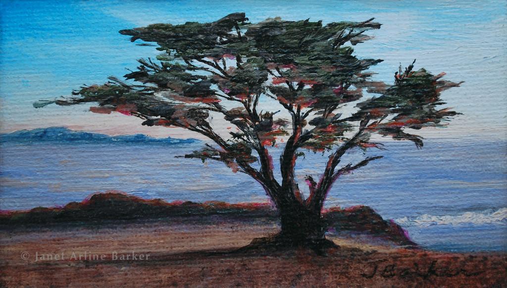 carmel cypress copy