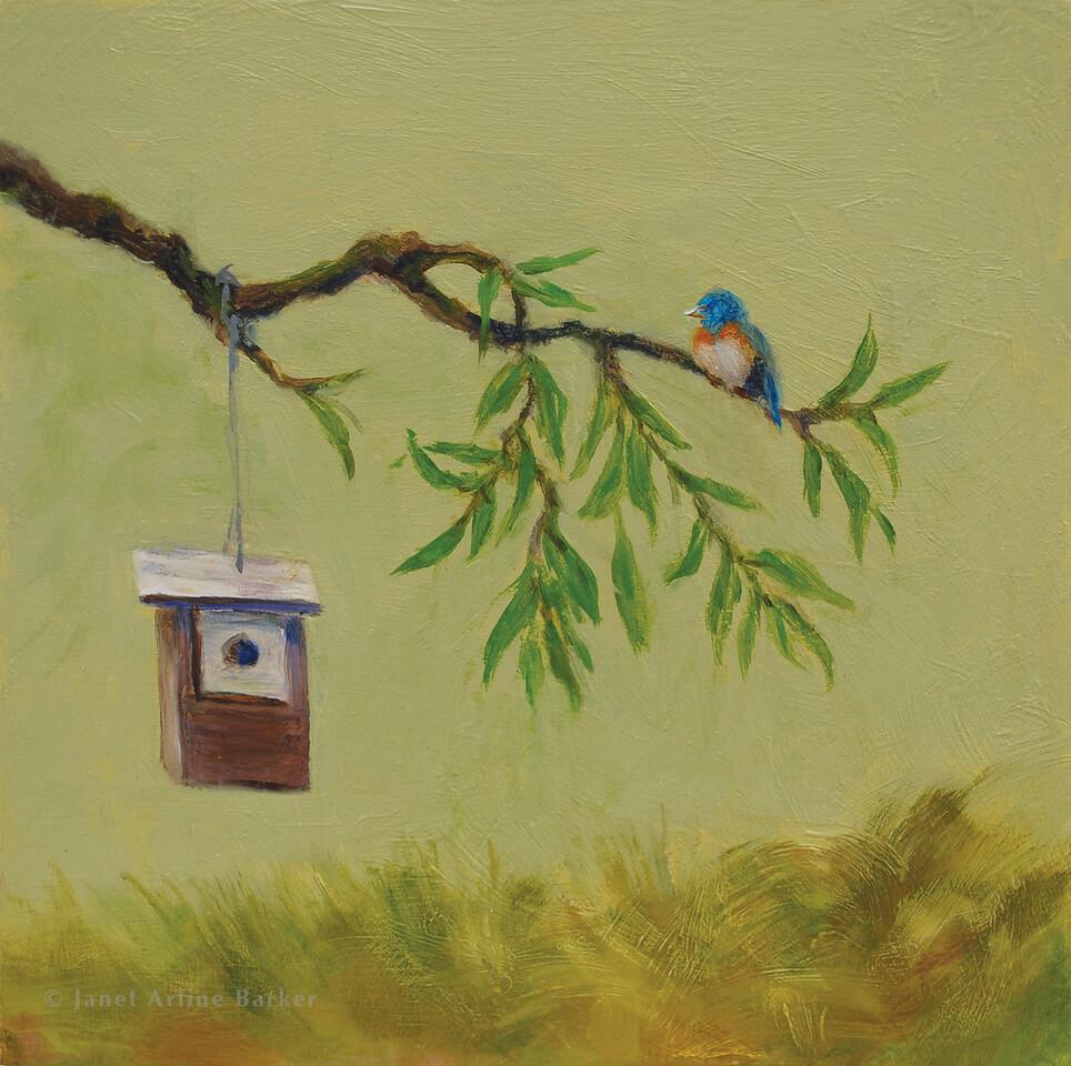 42-blue bird-DSC_0099