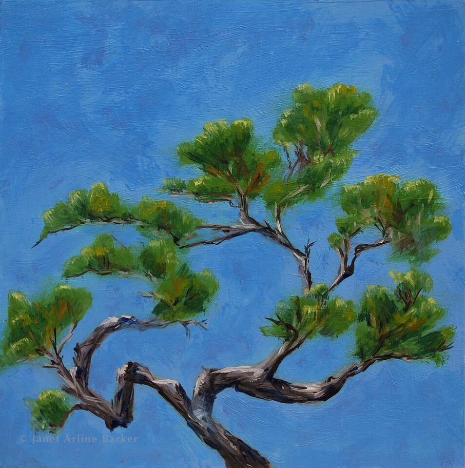 06-bonsai-DSC_0493