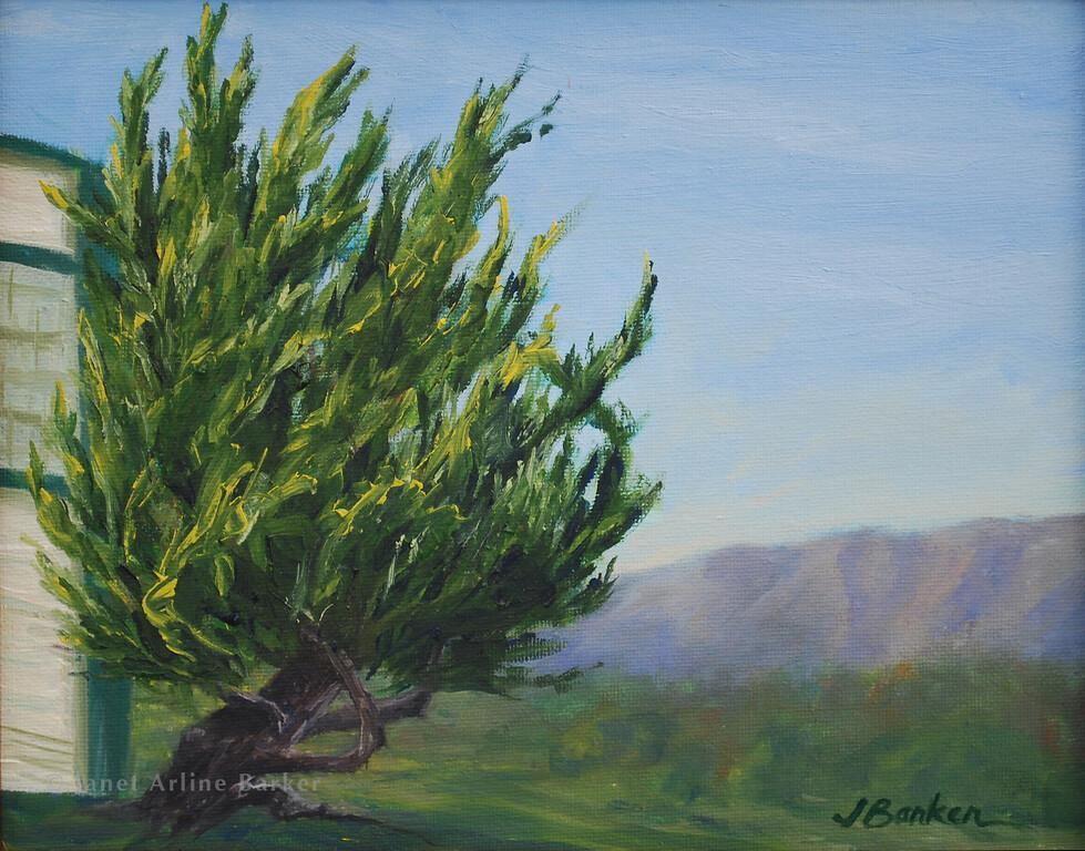 Cypress at San Bruno Library