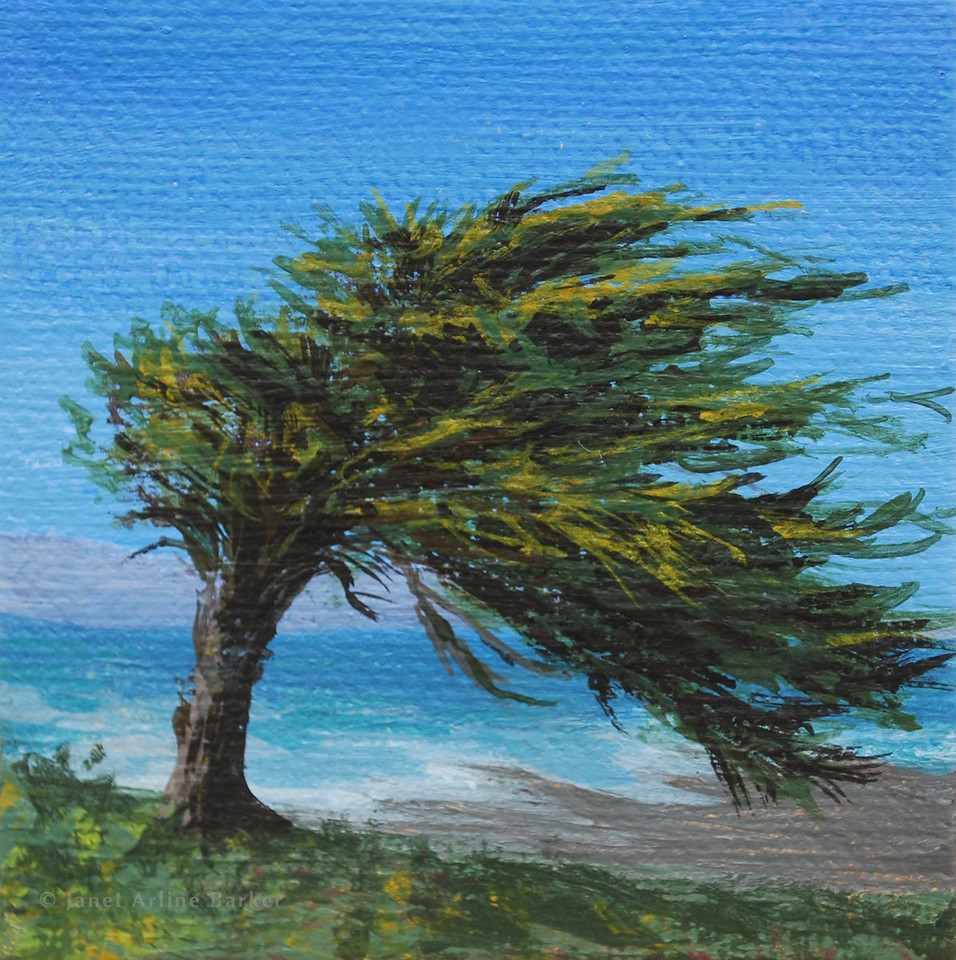 Cypress of Sharp Park