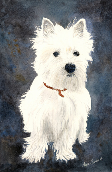I grew to love this Westie after working on him for 3 weeks!