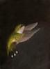 Grace - Ruby-Throated Hummingbird #2