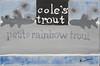 Cole's Trout