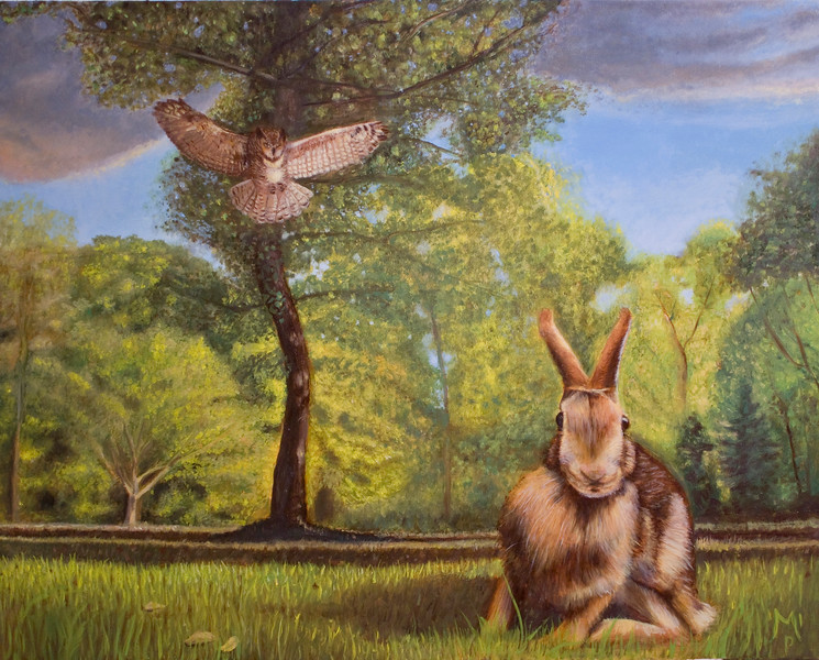 This is a landscape and animal portrait displaying a bit of wildlife drama. A Great Horned Owl goes in for the kill as a helpless Eastern Cottontail Rabbit is caught off guard.