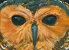 An original oil painting of a spotted wood owl.