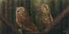 """(The Beginning of) The Nightwatch"" - An original oil painting of two Saw-Whet Owls named Hamlet and Nod."