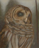 Barry the Barred Owl 3 - In the Fog