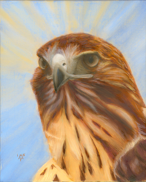 Portrait of a Lady - Red-Tailed Hawk Portrait