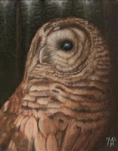 Barry the Barred Owl Watches the Moonrise