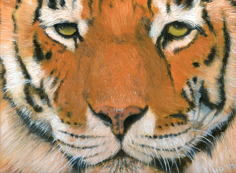 An oil painting of a Siberian Tiger by Michael Phillips