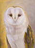 Surrey the Barn Owl Portrait