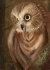 """A Nod to the Northern Saw-Whet Owl"" - A portrait of a Northern Saw-Whet Owl named Nod."
