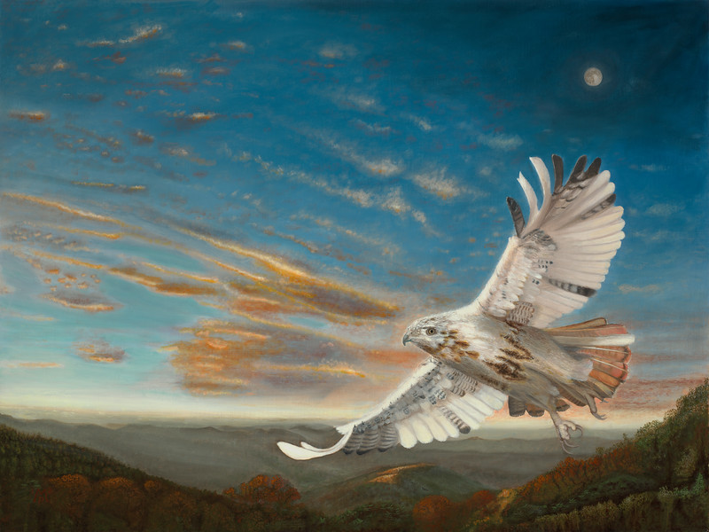 "An oil painting of an albino red-tailed hawk named ""Cloudfeather"". ""Cloudfeather's Dream"", 30"" x 40"", oils on linen birch panel, February 2013."