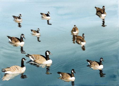Reflections- The reflections of these Canada geese in the water in Hyannis Harbor were perfect!