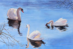 Swan Reflections - the reflections are almost abstract and tell their own story.