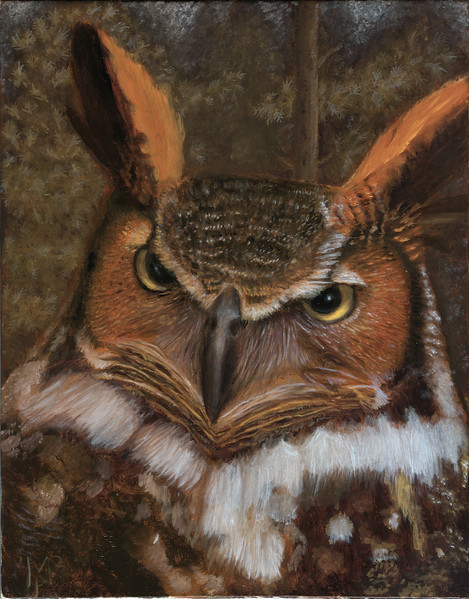 A portrait of a great horned owl.