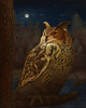 "An oil painting of a Eurasian Eagle Owl named Oriead. ""Oriead, Queen of the Forest"", oils on linen birch panel, 30"" x 24"", July 2013."