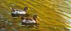 An original oil painting of mallard ducks on Lake Louise in Weaverville, NC.