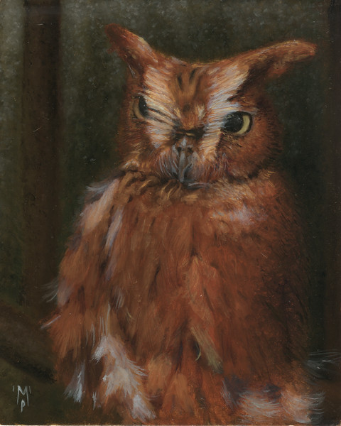 """The Little Wizard of the Forest"" - A portrait of a red-phase screech owl named Wizard."