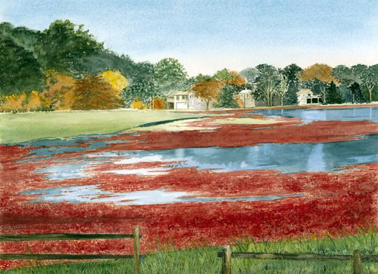 Cranberry Bog - In the Fall, we enjoy the many bog views on the Cape