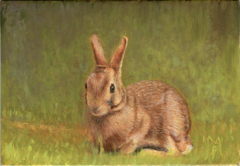 """""""A Day in the Life of a Rabbit Part 1"""" A painting of an Eastern Cottontail Rabbit - September 2011"""