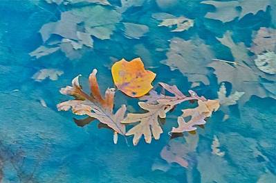 Panning Leaves Down Stream